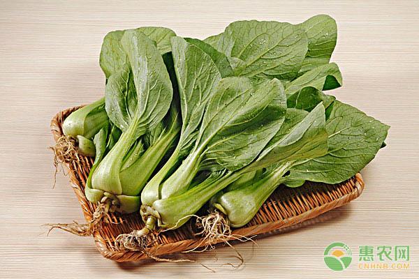 小白菜的食用功效