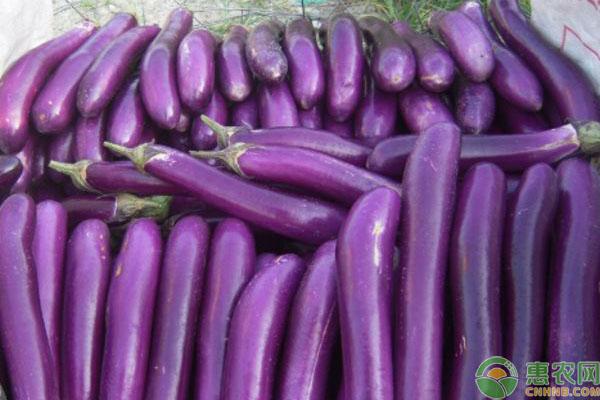 亚博-茄子最新价格多少钱一斤?有什么功效作用及食用禁忌?