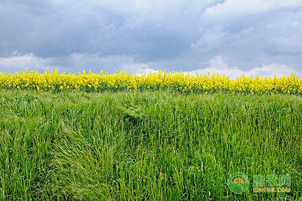 粮油类产品包括哪些?粮油类种子种苗价格一般是多少?
