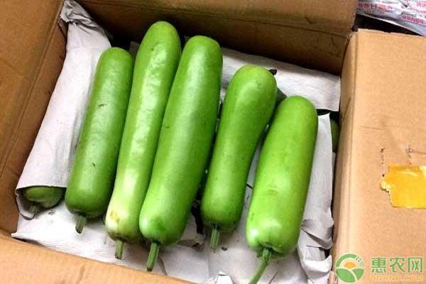 瓠瓜的主要品种