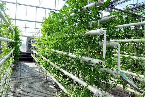黄龙县围绕农业产业规模化升级,大力解决贫困问题并助力经济发展