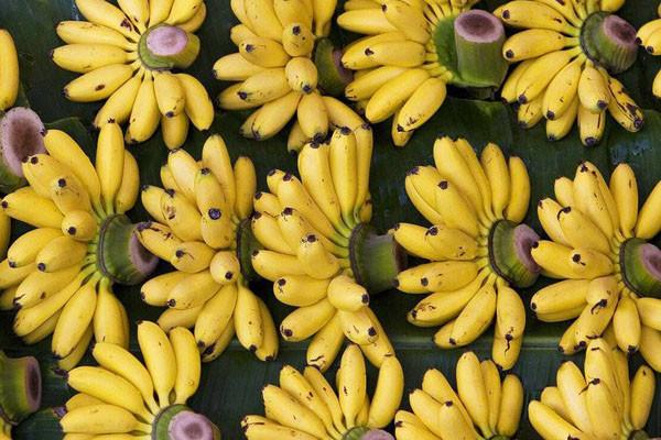 现在小米蕉多少钱一斤?小米蕉的功效作用及催熟方法