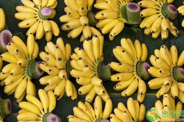 小米蕉功效作用