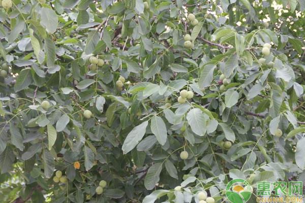 2019年农村种植哪些水果不愁销路?这四个项目你觉得如何