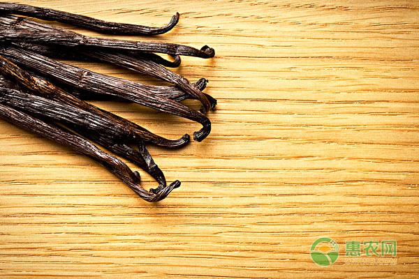现在香草豆价格怎样?香草豆有什么营养价值与功能?