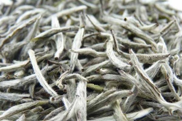 白茶有哪些品种?多少钱一斤?白茶功效与作用及禁忌