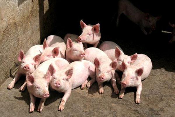 为保护环境减少污染,畜禽粪污转化成有机肥有补贴拿了!