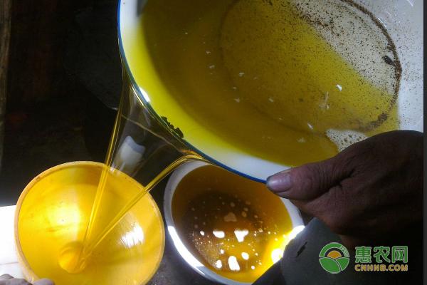 圣子油的选购方法