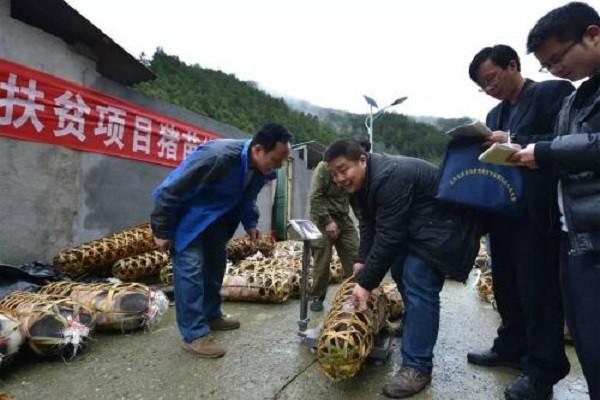 栏杆集镇打造瓜蒌子产业园基地种植,实现脱贫增收!