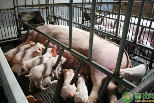2019养猪成本