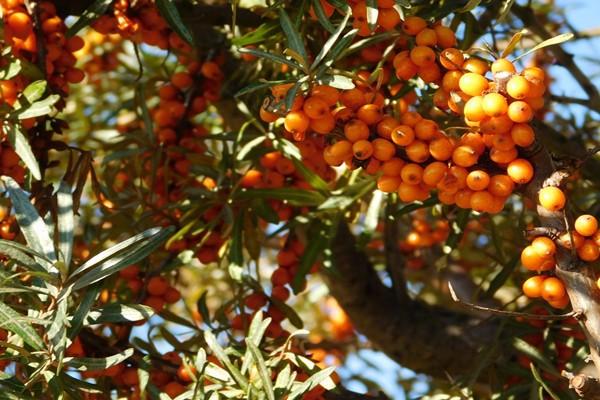 2019农村想要创业,这四大特种水果种植项目可以考虑!