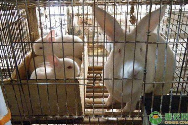 懒兔养殖管理