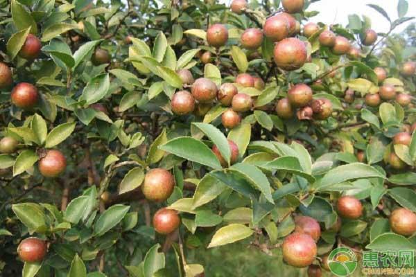 油茶产业扶贫