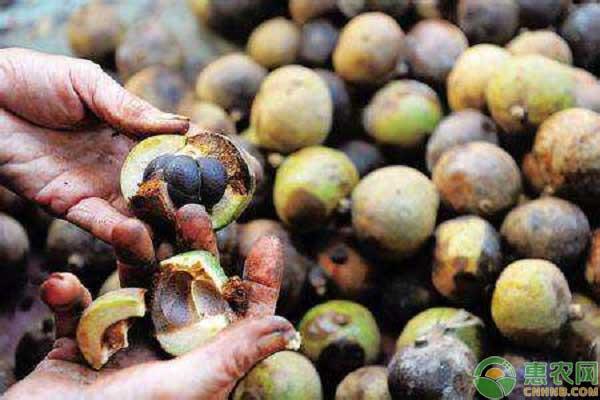 油茶产业模式改革