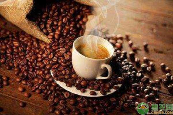 咖啡豆价格