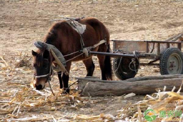 骡驴马的区分