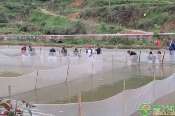 稻蛙鱼养殖