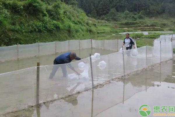 稻蛙鱼生态养殖