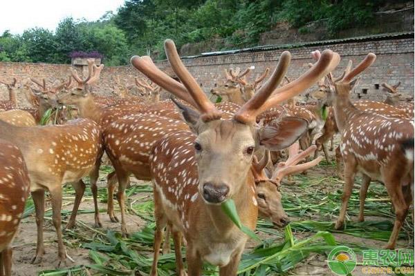 野生动物养殖证件办理