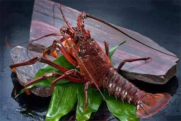 龙虾的品种有哪些?各品种龙虾的食用季节和主要产地是什么?