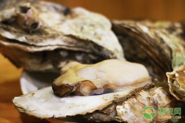 牡蛎最新价格