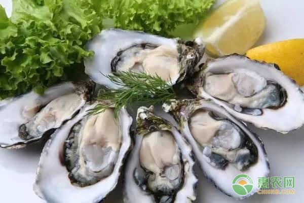 牡蛎如何清洗处理?