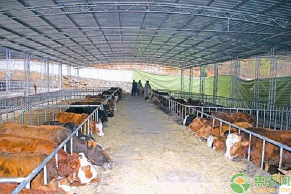 肉牛养殖发展规模