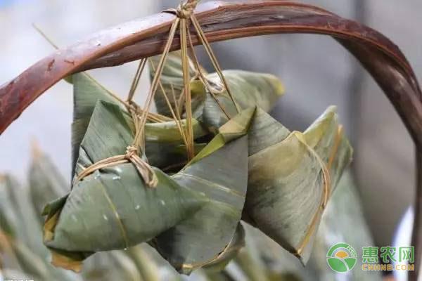 端午节已经过去,自家吃不完的粽子该如何保存才不变质?