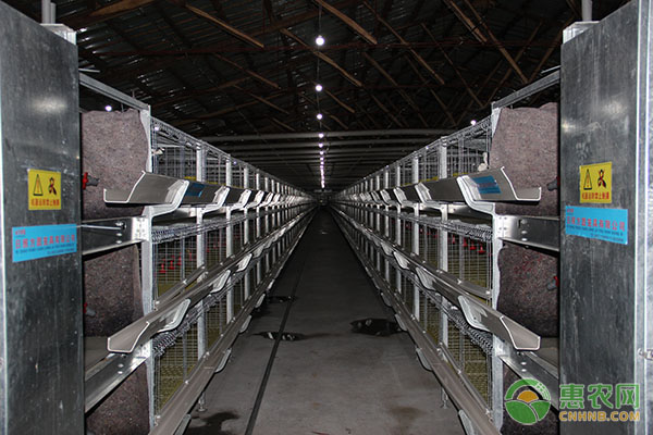 现在一套笼养设备价格要多少钱?蛋鸡不同笼养设备的优缺点