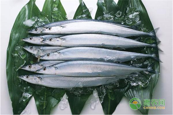 今日针鱼价格多少钱一斤?有哪些营养价值?吃针鱼有什么好处?