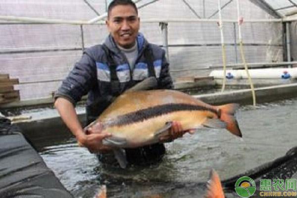 胭脂鱼的饲养方式