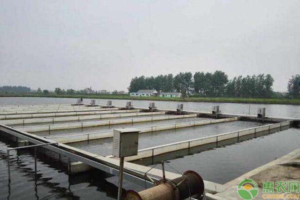 梭鱼的养殖方式