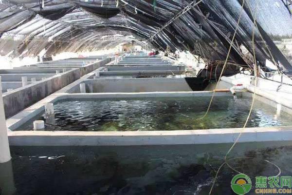 石斑鱼人工养殖方法