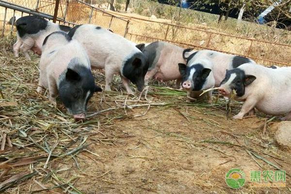 农村创业做什么能赚大钱?这五个种植养殖项目都是大商机!