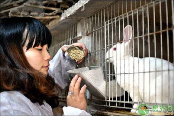 兔子经济发展