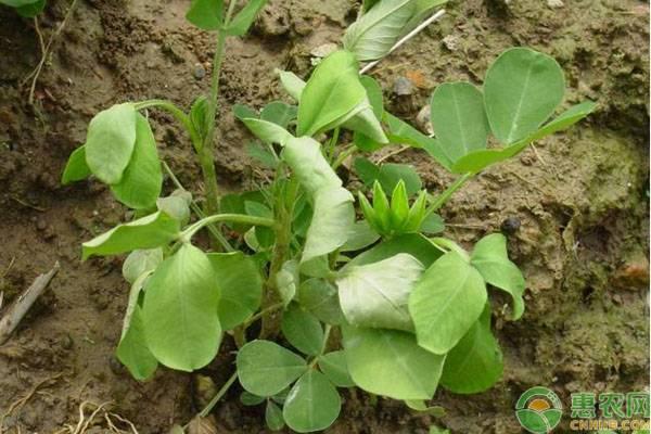 花生田常用的三种除草方法