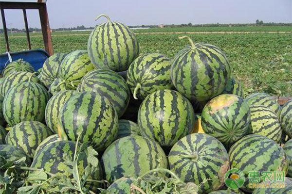 夏天如何买到又甜又大的西瓜?这三招值得借鉴!