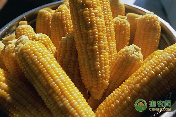 玉米为什么要进行人工去雄?玉米人工去雄要注意哪些事项?