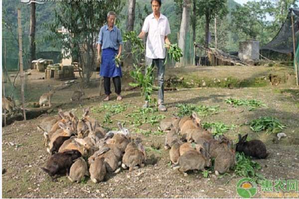 野兔产业养殖