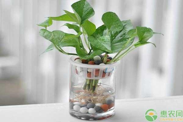 水生绿植价格