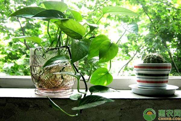 水生绿植养护