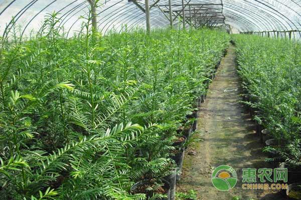 夏季对苗木的养护得做好这七个要点,值得珍藏!