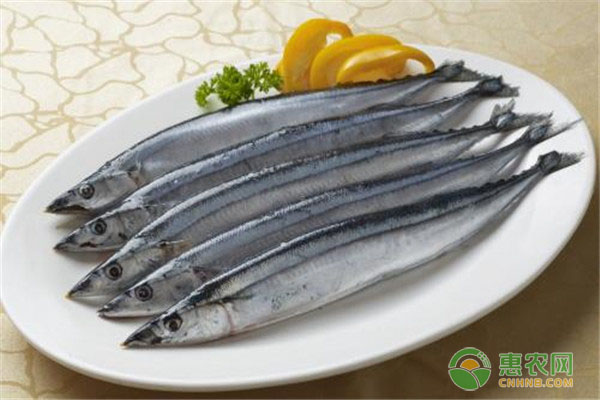 秋刀鱼有哪些营养价值?吃了有什么好处?为何不能多吃?