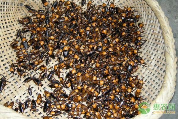 农村养殖什么有前景?这五大特色虫子推荐给你!