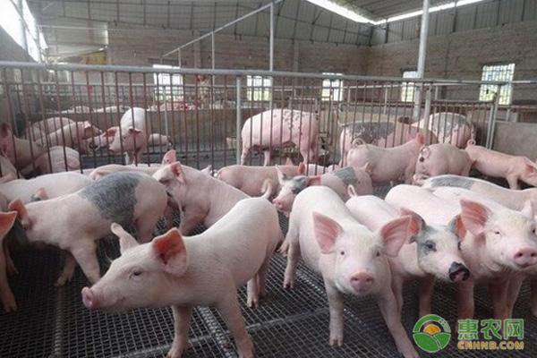 生猪养殖项目