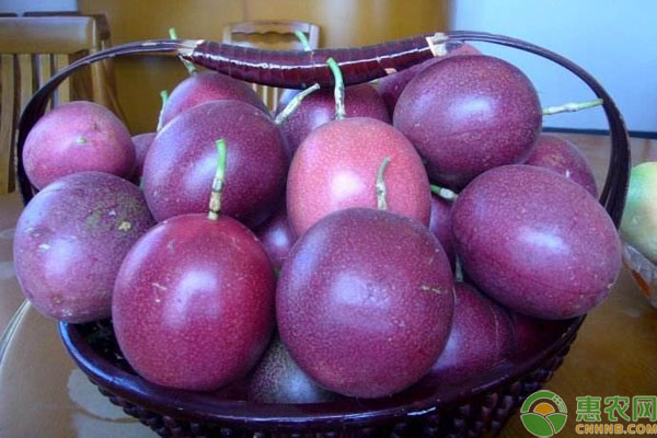 百香果较火的品种