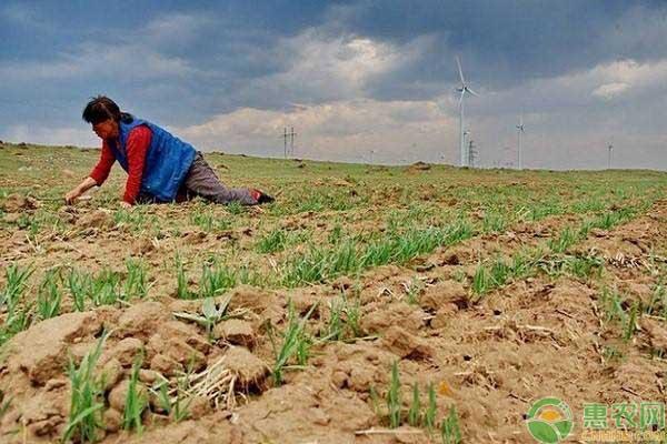 耕地地力保护补贴方法事宜
