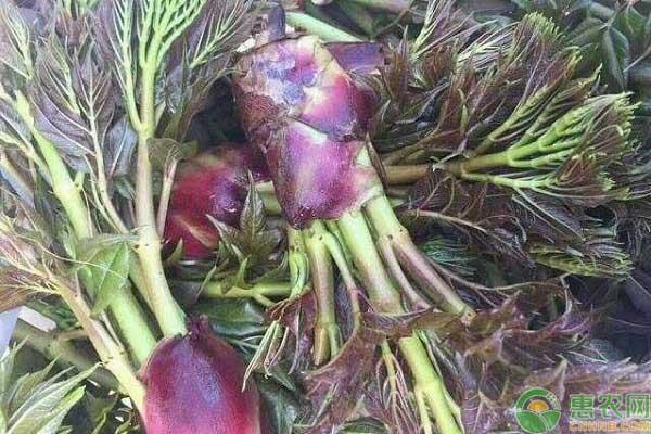 特色水鬼蔬菜种植项目创业致富