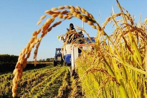 """村干部通知:2019年7月起将实施""""四大政策"""",农民朋友的福利来了!"""