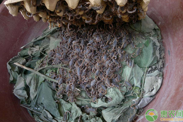 蝎子养殖致富